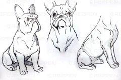 Скетч собаки